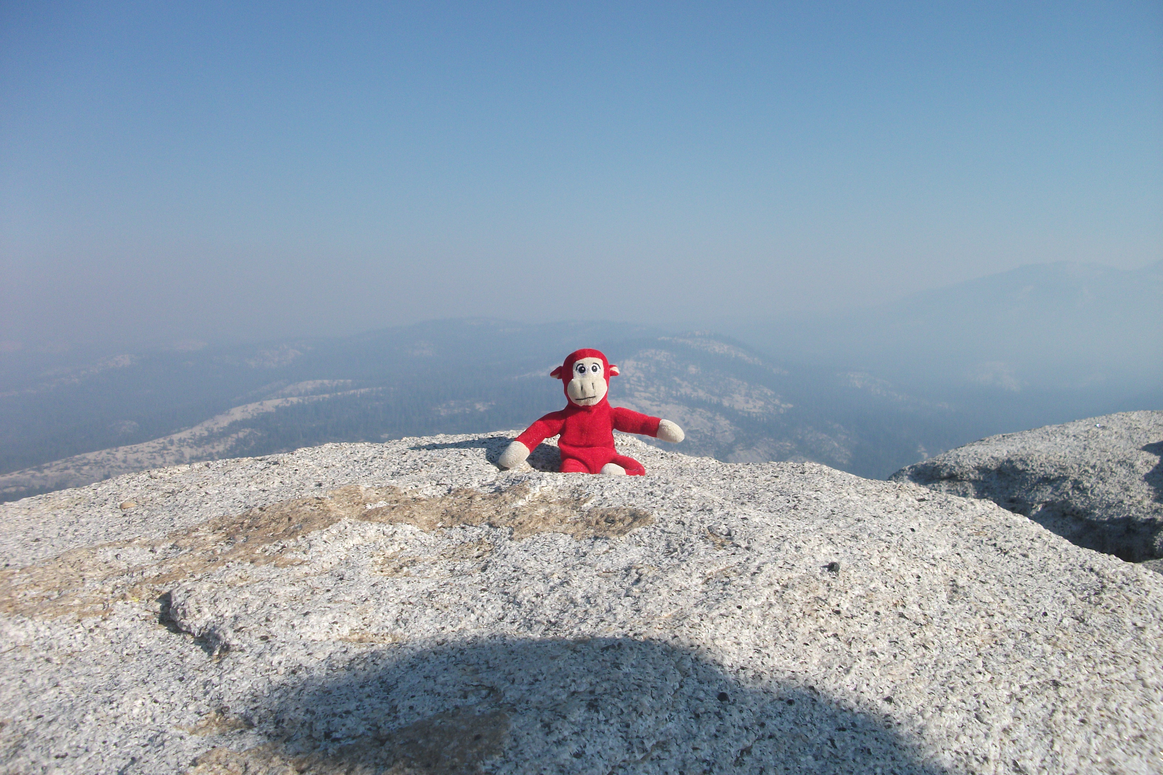 Bella's Red Monkey made it to the top